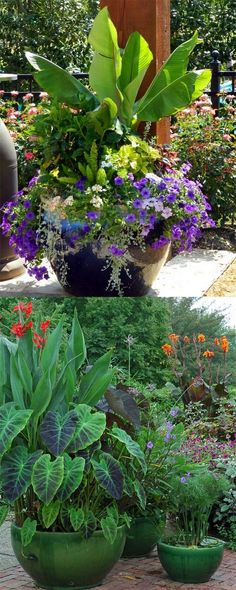24 stunning container garden designs with plant list for each and lots of inspirations! Learn the designer secrets to these beautiful planting recipes.  - A Piece Of Rainbow  http://www.apieceofrainbow.com/container-garden-planting-designs/2/