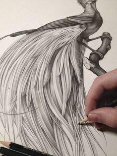 Le studio parisien d'arts graphiques Violaine et Jeremy propose de la direction artistique, des sites internet, de l'édition, de la production vidéo mais également, du dessin. Parmi leurs meilleurs travaux, on retrouve ces animaux originaux, ornés de barbes faunesques et de plumes minutieuses.