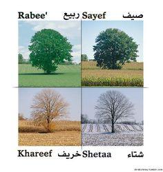 Learn Arabic  **** Good Info!!!***