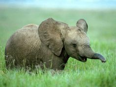 llbwwb:   (via baby elefant by Bodyshor Pixdaus)