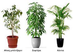 10 φυτά εσωτερικού χώρου ανθεκτικά και ιδανικά για διακόσμηση Indoor Plants, Planter Pots, Sweet Home, Room Decor, Garden, Flowers, Decoration, Design, Balcony