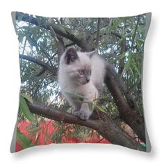 Kitty Throw Pillow for Sale by Cotfas Doina Pillow Sale, Poplin Fabric, Kitty, Throw Pillows, Cats, Places, Prints, Animals, Image