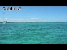 Dolphins at Small Hope Bay Lodge, Andros Island, Bahamas