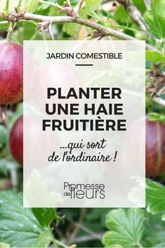How to plant a fruit hedge? Our advice and a selection of original fruit trees and small fruit shrubs de mantenimiento de jardines Fruit Bushes, Fruit Trees, Potager Garden, Garden Planters, Comment Planter, Garden Online, Fruit Garden, Plantar, Hedges