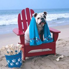 Bulldog sitting on adirondack chair on beach by MarieDolphin on Getty Images Bulldog Rescue, Rescue Dogs, Bulldog Puppies, Animals And Pets, Funny Animals, Cute Animals, Party Animals, Cute Bulldogs, British Bulldog