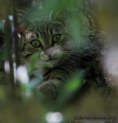 Kissamaista - www.christervaltanen.fi