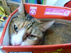 Exactly why cats love boxes so much--