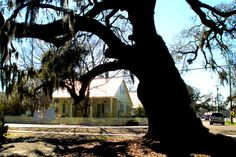 Giant oak tree and house - Madisonville - Louisiana Lake Pontchartrain, New Orleans Louisiana, Oak Tree, North Shore, Plants, House, Home, Plant, Homes