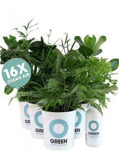 Ogreen Clean Machines  #ogreen #cleanmachine #plants  www.ogreen.eu