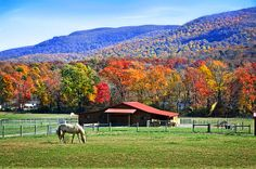 Title  Autumn In Rural Virginia - Fine Art By Lynn Bauer   Artist  Lynn Bauer   Medium  Photograph - Photography/digital Art