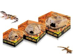 The Exo Terra Gecko Cave makes the perfect addition to your gecko terrarium. A secure hide is an essential feature of the natural terrarium. Without a proper hide and sleeping area, geckos can easily develop stress that may affect their well-being and appetite. | eBay!