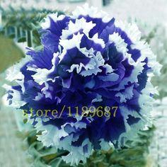 100 pcs rare blue petunia seeds flower hanging petunia Petunia Petals,Annuals,Four Seasons Can Be Planted