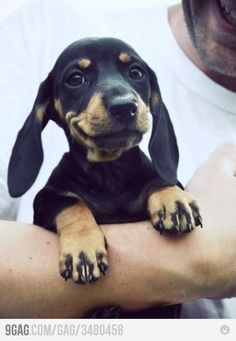 Love smiling animals!