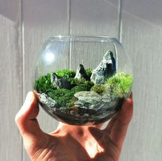 The world in the palm of your hands...  Terrarium by bioattic