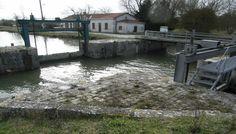 Le canal du Curé, un coin de pêche au carnassier méconnu