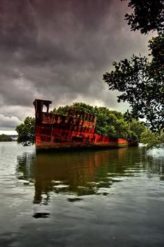"THE 'FLOATING FOREST' IN HOMEBUSH BAY near Sydney Australia. ""....though none are enveloped by nature quite like the Ayrfield. The ship continues to attract visitors to its majestic presence, rich with mangrove trees."""