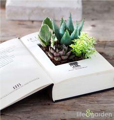 Zelfs een oud boek is te gebruiken als potje voor je Succulenten.  Tip: gebruik een leeg (wattenstaaf)doosje om de grond en plantjes in te doen, zodat het boek droog blijft.