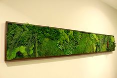 Living picture frame, moss and fern http://www.archiexpo.com/prod/greenlife-concept/living-art-frames-66717-428572.html