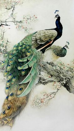 Passaro pinturas en 2019 Peacock art Colorful drawings y Bird art Peacock Painting, Peacock Art, White Peacock, Ink Painting, Watercolor Peacock Tattoo, Chinese Painting Flowers, Dandelion Painting, Peacock Colors, Peacock Design