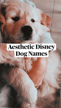 Cute Animal Names, Cute Puppy Names, Cute Names For Dogs, Cute Baby Dogs, Cute Little Puppies, Cute Funny Dogs, Cute Dogs And Puppies, Cute Animal Pictures, Cute Funny Animals