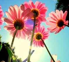 Sunlight beams down to illuminate these pink beauties