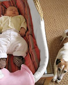 Tips on prepping your pet for a new baby