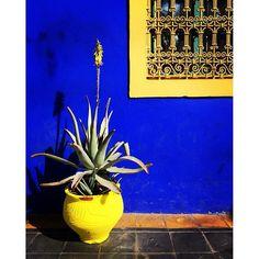 Les couleurs incroyables du Jardin Majorelle