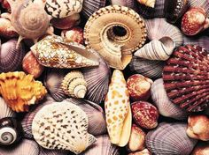 collage of shells