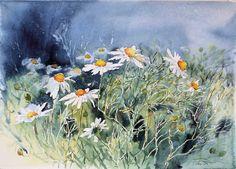 #Chamomiles on hot pressed #watercolor #paper.  #hahnemuehle #hahnemuehlepaper #flowers