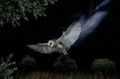 El árbol de la lechuza Folklore, Bald Eagle, Owl, Bird, Animals, Mexican, Gardens, Goal, Vertical Gardens