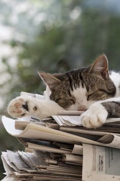 Happy Cat Tired reading!