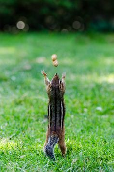 I Like Big Nuts and I Cannot Lie by Brand!n Via Flickr: Nut Worshiping Rodent