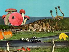 Mushroom Land, surreal collage