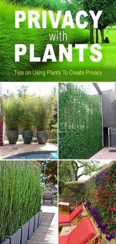 Privacy with Plants! • Tips and ideas on how to use plants to create privacy in your garden or yard! by rachelle #privacylandscape