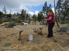 Outdoor photo diorama setup for model horses at Models in the Mountains 2015.
