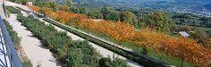 The-terrace-of-roses-and-boxwood- « Landscape Architecture Works   Landezine