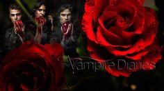 High Resolution Wallpapers = vampire diaries backround, 1062 kB - Sherwin Young