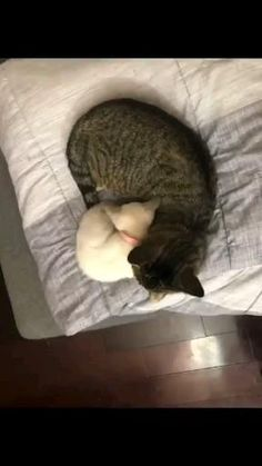 Funny Cute Cats, Silly Cats, Cute Cats And Kittens, Cute Funny Animals, Crazy Cats, Kittens Cutest, Pretty Cats, Beautiful Cats, Animals Beautiful