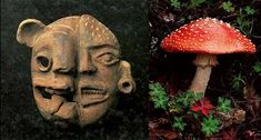 Tons of research showing the use of hallucinogenic mushrooms and religion: a mushroom stone cult that came into existence in the Guatemala Highlands and Pacific coastal area around 1000 B.C. along with a trophy head cult