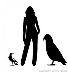 The flightless 'squawkzilla' stood three feet tall and was twice the weight of the kakapo, the heaviest parrot alive today. Parrot Stand, Weird Birds, Giant Eagle, Central Otago, Living In New Zealand, Archaeology News, Bird Species, Hercules, Science And Nature