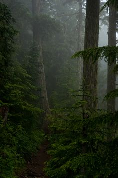 pure forest byCrest Pictures