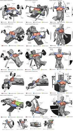 Workout Experiences Chest:  Triceps:  Biceps:  Shoulders:   Back:  Legs:   Abs:  Others: