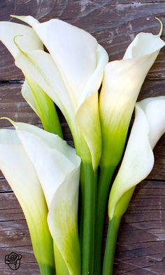 Send anyone their very own calla lily bouquet. Our callas are grown sustainably in varying colors like purple and white and ship hassle-free! My Flower, Pretty Flowers, White Flowers, Calla Lillies, Calla Lily, Lilies Flowers, Flowers Nature, Zantedeschia, Belleza Natural