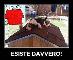 Snoopy è reale!