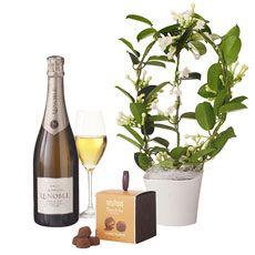 Stijlvol een bruiloft of verjaardag vieren doet u met Franse Champagne, Belgische chocoladetruffels van Neuhaus en een mooie, witte stephanotis plant.