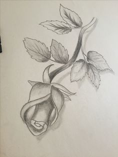 Pencil Sketches Of Roses Heart And Rose Drawings In Pencil Free