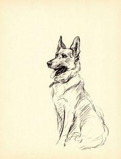 German Shepherd Tattoo, German Shepherd Dogs, German Shepherds, Animal Drawings, Art Drawings, German Shepherd Pictures, Dog Artwork, Dog Books, Vintage Dog
