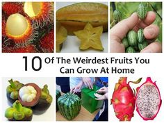 10 Of The Weirdest Fruits You Grow At Home: http://www.naturallivingideas.com/10-of-the-weirdest-fruits-you-can-grow-at-home/