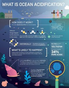 Science infographic and charts What is Ocean Acidification? Infographic by Elzemiek Zinkstok Ocean Projects, Science Fair Projects, What Is Climate, Climate Change, Earth Science, Life Science, Science Notes, Science Experiments, Ocean Acidification