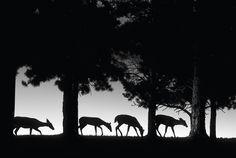Jim Brandenburg nature photography